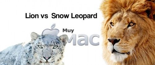Lion vs Snow Leopard