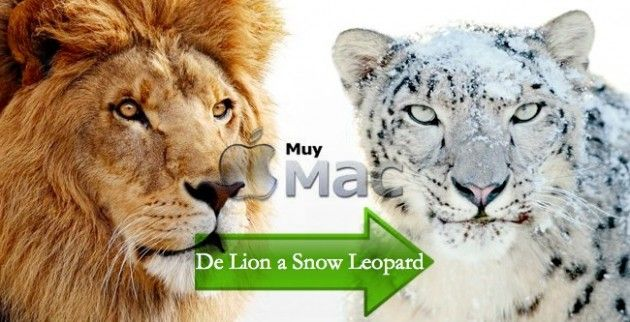 De Lion a Snow Leopard